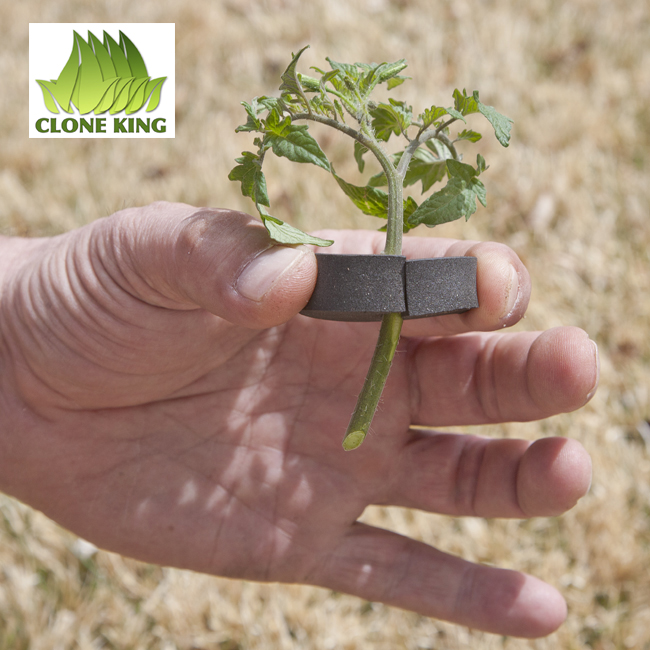 clone king 25 site aeroponic cloning machine